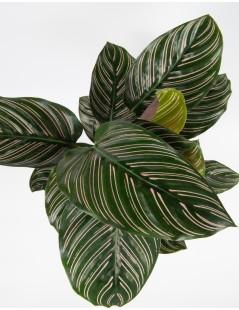 planta-vienna