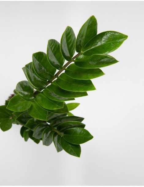 planta-shanghai